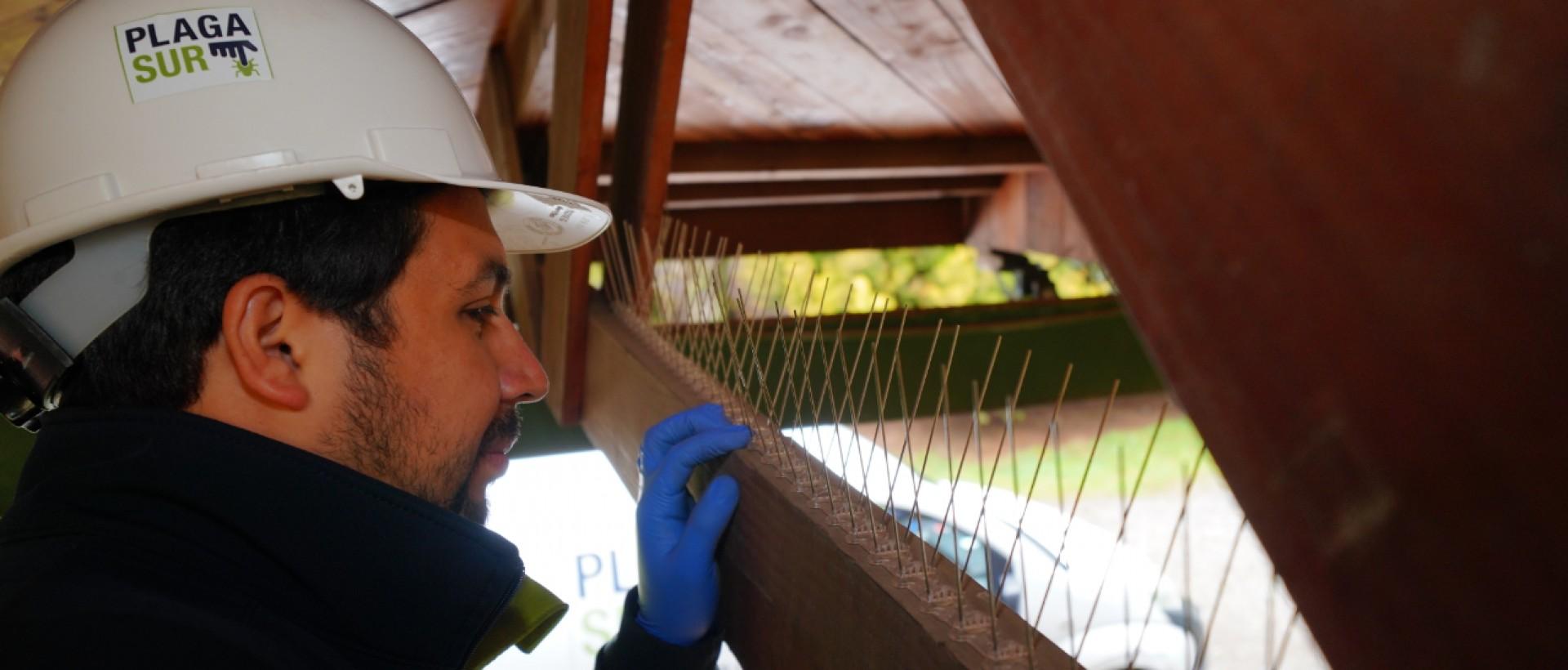 PLAGASUR® | Porque es tu casa y NO la de ellos! | Sanitización · Desratización · Desinsectación · Control de palomas y murciélagos · Valdivia - Puerto Montt - Puerto Varas - Osorno - Castro | Control de palomas y murciélagos