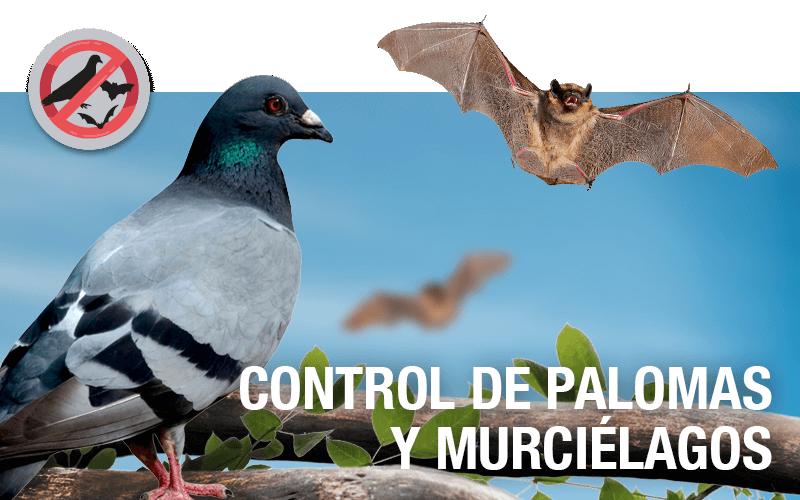 Control de palomas y murciélagos - PLAGASUR® | Porque es tu casa y NO la de ellos! | Sanitización · Desratización · Desinsectación · Control de palomas y murciélagos · Valdivia - Puerto Montt - Puerto Varas - Osorno - Castro