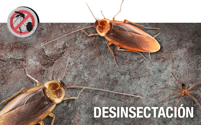 Desinsectación - PLAGASUR® | Porque es tu casa y NO la de ellos! | Sanitización · Desratización · Desinsectación · Control de palomas y murciélagos · Valdivia - Puerto Montt - Puerto Varas - Osorno - Castro