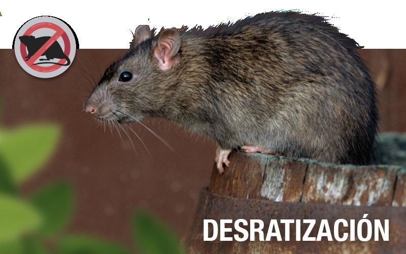 Desratización - PLAGASUR® | Control de Plagas en Puerto Montt - Puerto Varas - Osorno - Castro