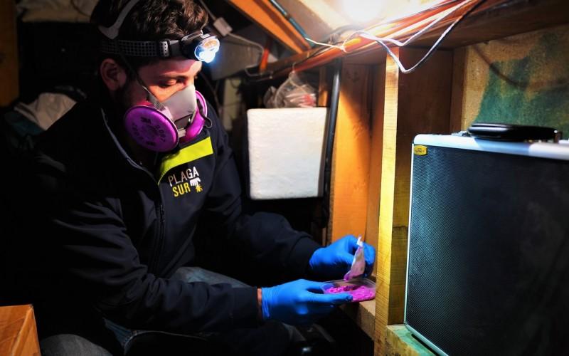Desratización Pre Demolición - PLAGASUR® | Control de Plagas en Puerto Montt - Puerto Varas - Osorno - Castro